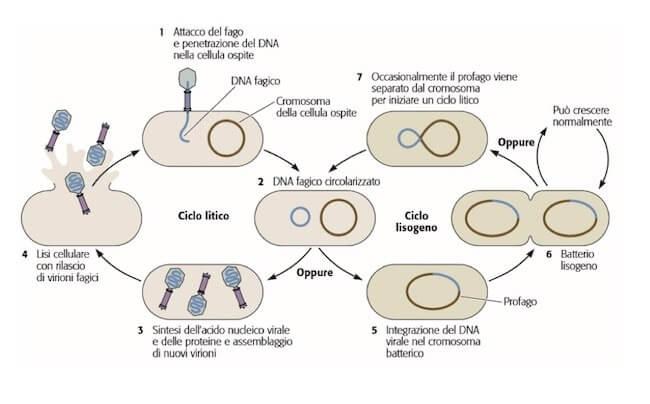 Virus Biologia