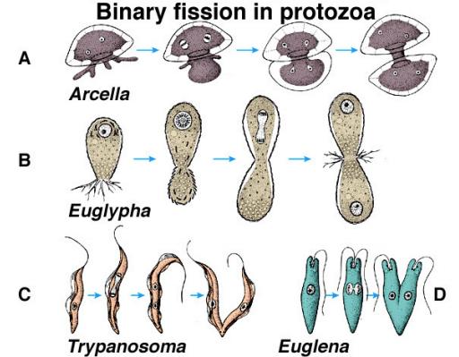 come investire in bitcoin etere e litecoin cosè la fusione binaria in biologia