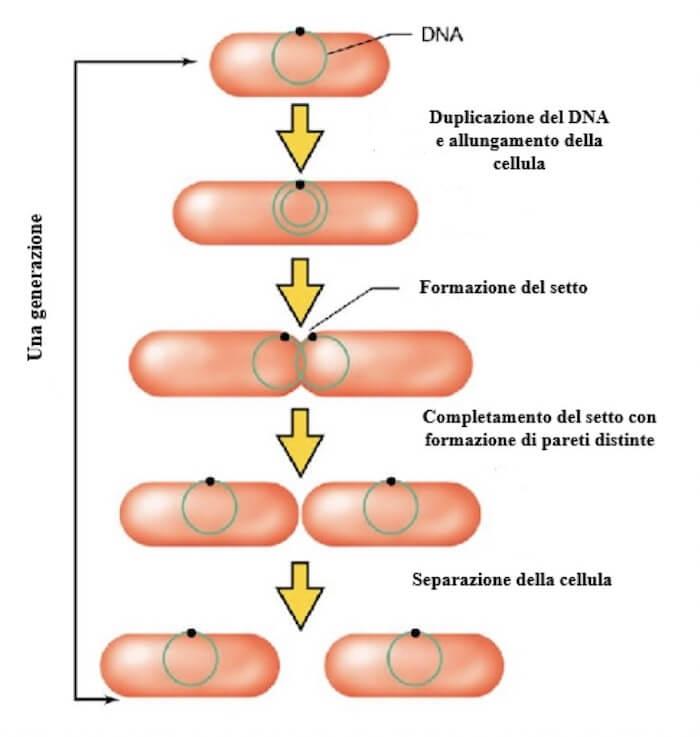 come giocare in borsa con optionweb cosè la fusione binaria in biologia
