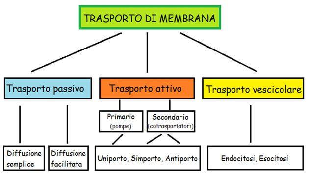 Membrane biologiche e trasporto pdf merge