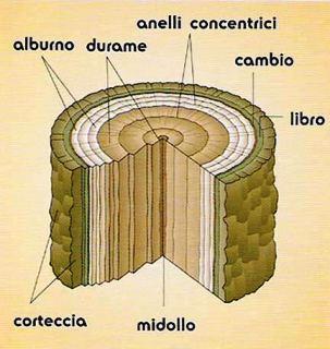 Il legno - Alberi da interno ...